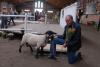Almnäs blev bästa Suffolk på auktionen